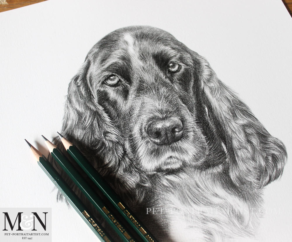 Spaniel Pencil Drawing