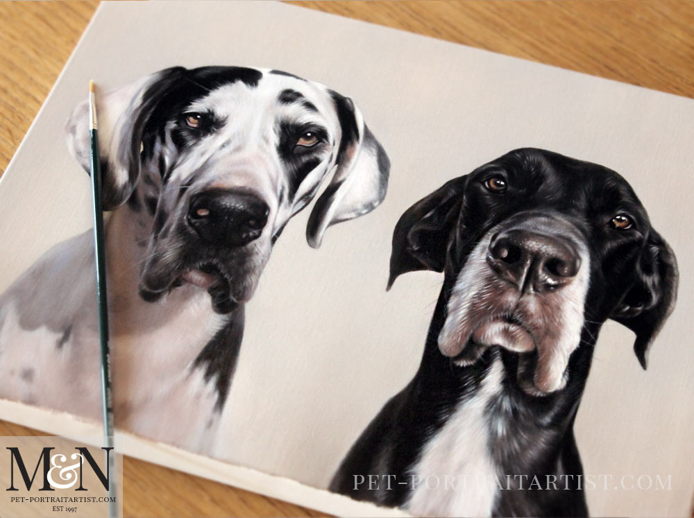 great dane pet portraits