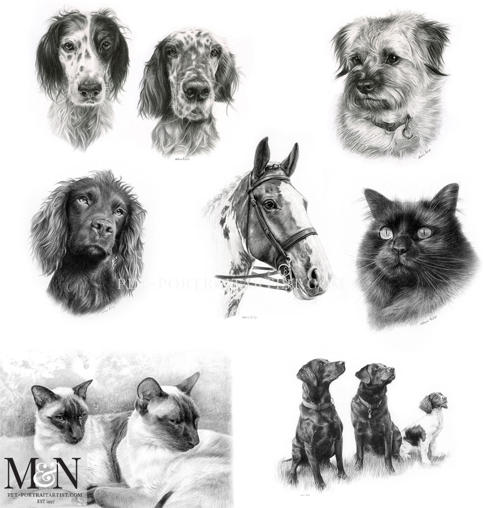 Introducing Our Pet Portraits Pencil Pet Portraits by Melanie Phillips