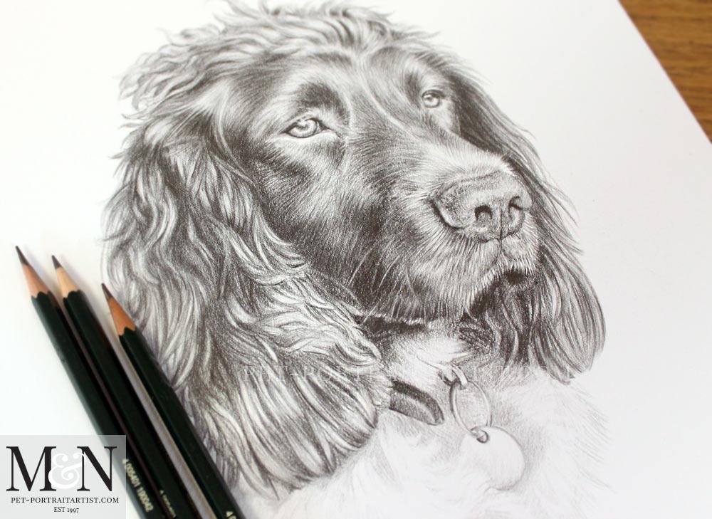 Spaniel Pet Portraits