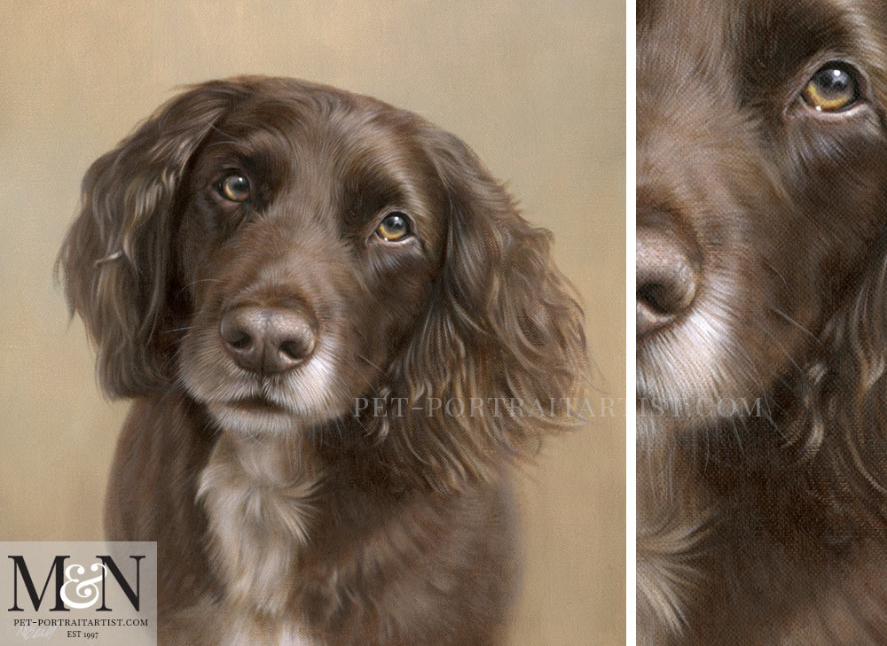 Spaniel Oil Portrait