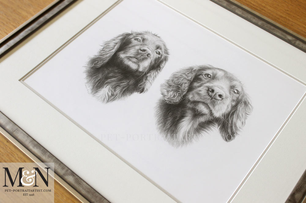Spaniel Pencil Pet Portraits