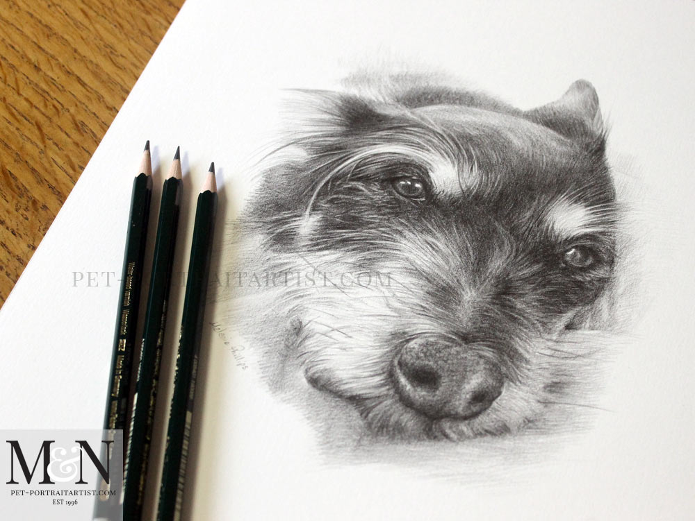 Pencil Drawing Pet Portrait