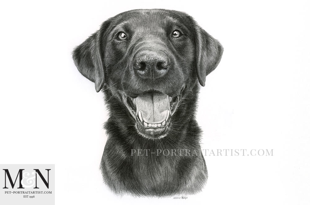 Black Labrador Pet Portraits