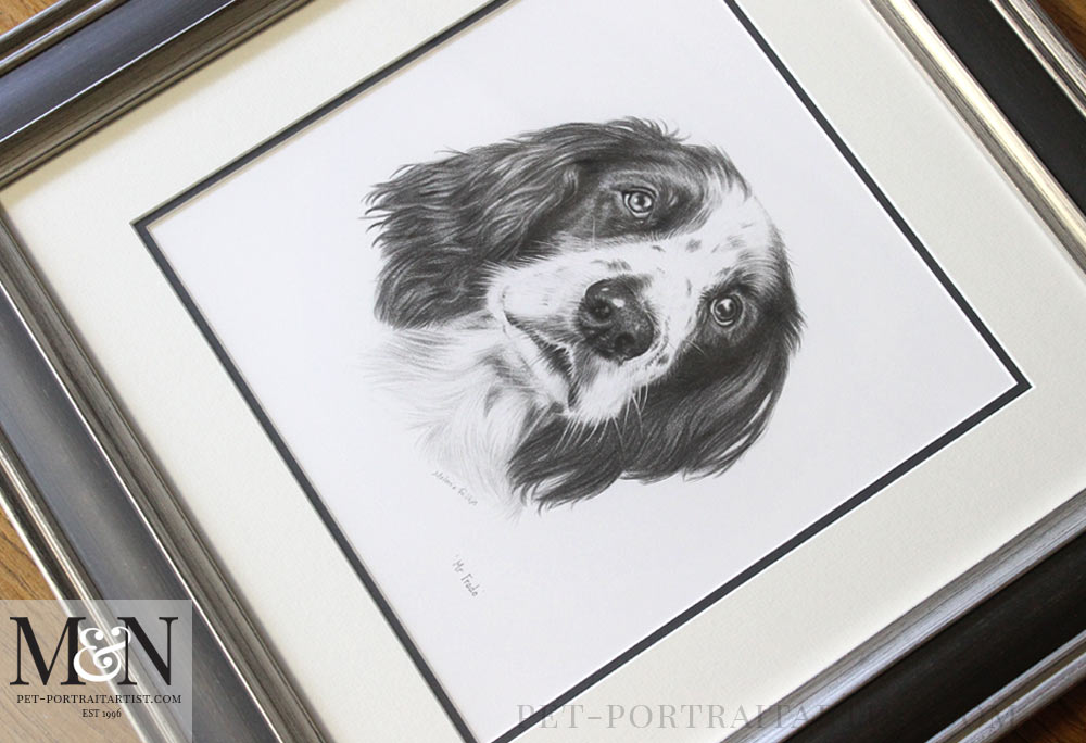 Spaniel Pencil Portraits