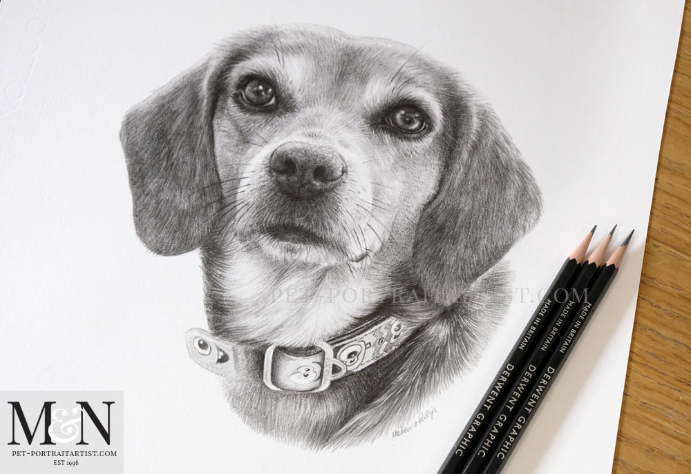Beagle Pet Portrait of Frannie