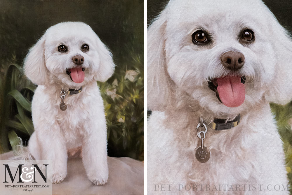 Bichon Frise Oil Painting