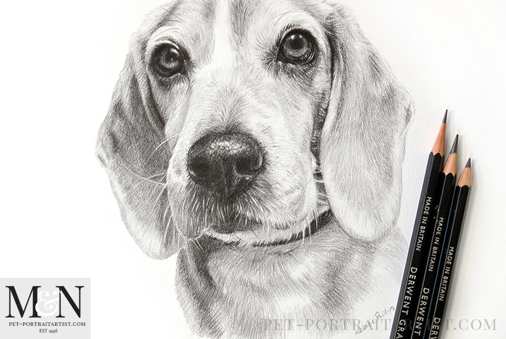 Beagle Pet Portrait of Blue