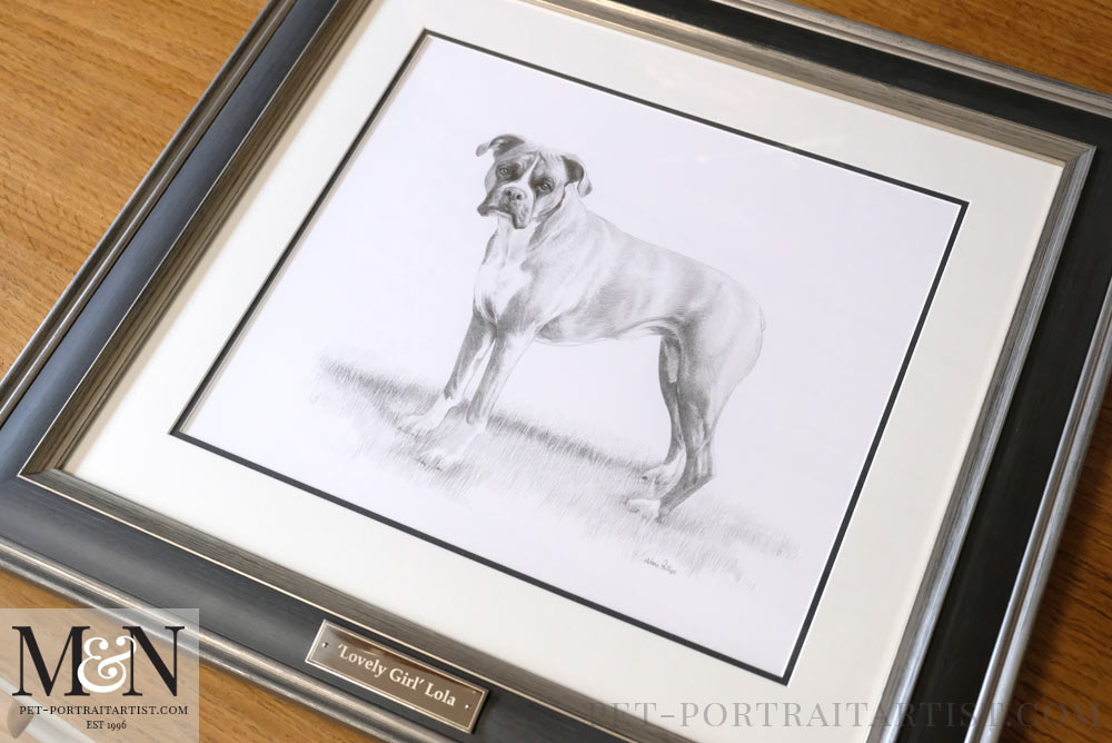 Boxer Dog Drawing Framed