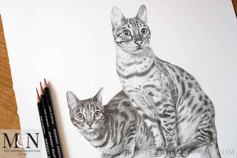 Cat Pencil Drawing Framed