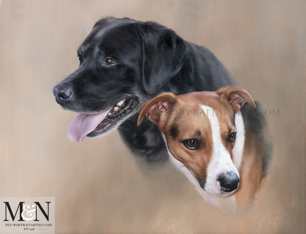 Dog Portrait of Dessie and Jasper
