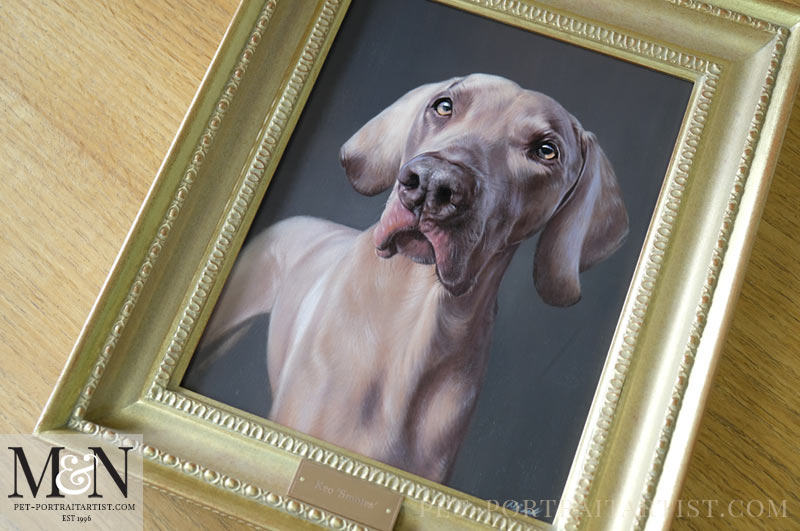 Beautiful full view of the Weimaraner oil portrait.