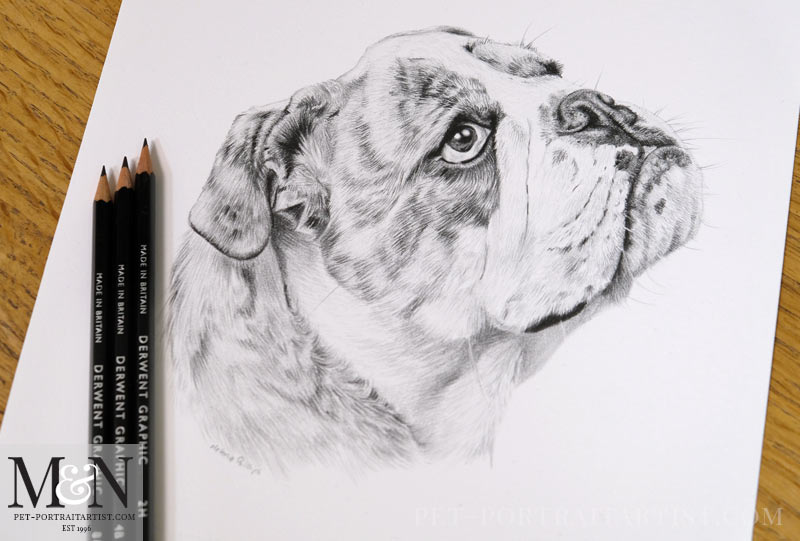 Bull Dog and Cow Pet Portraits