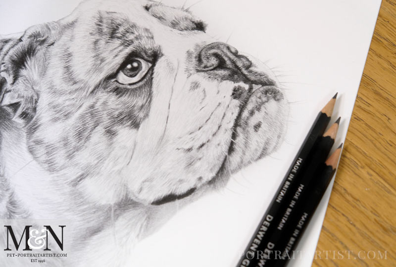 Bull Dog Pet Portraits