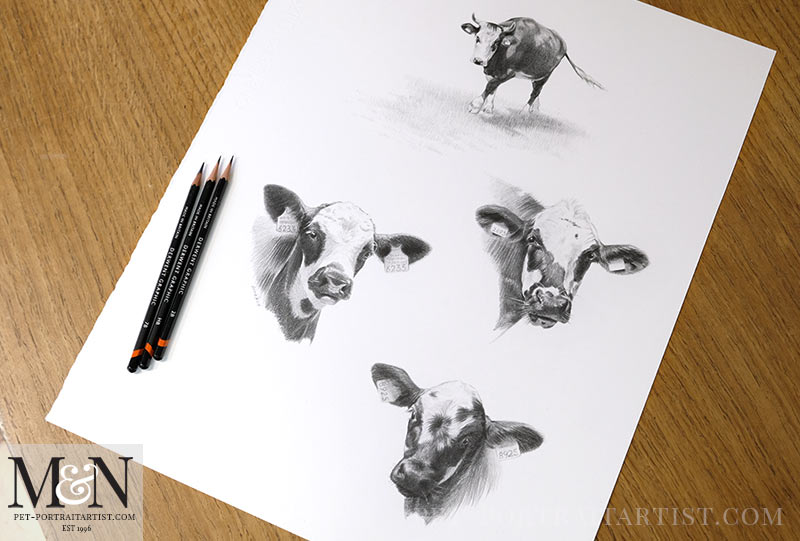 Cow Pet Portraits