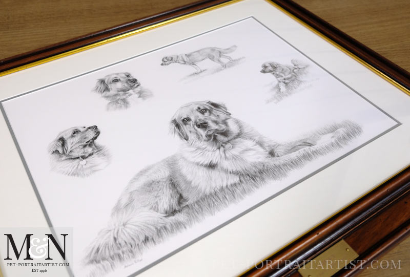 Pencil Pet Portrait Montage Framed