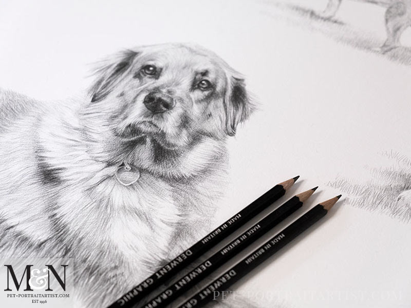 Pencil Pet Portrait Montage Detail