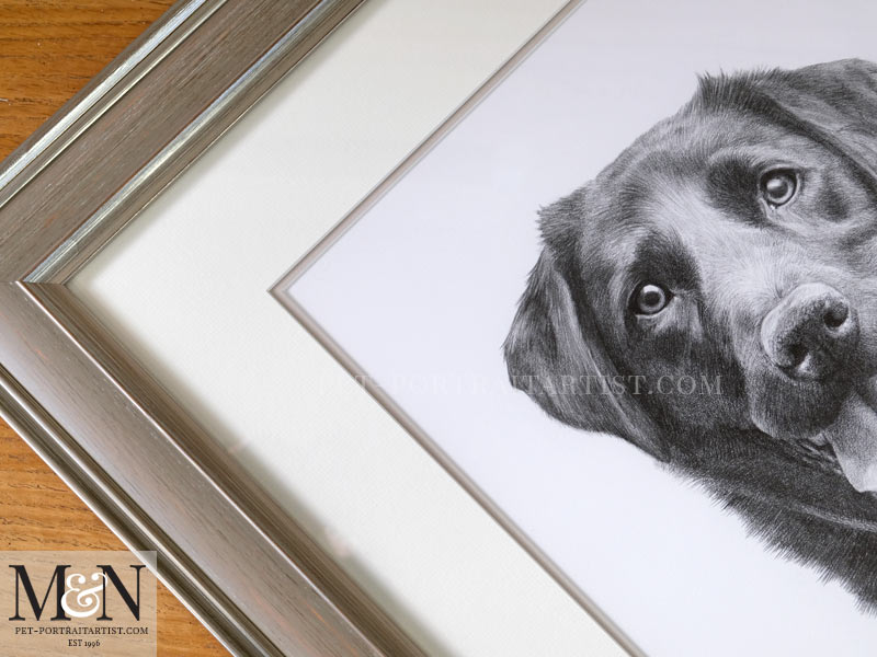 Photo of the Black Labrador Portrait Framed
