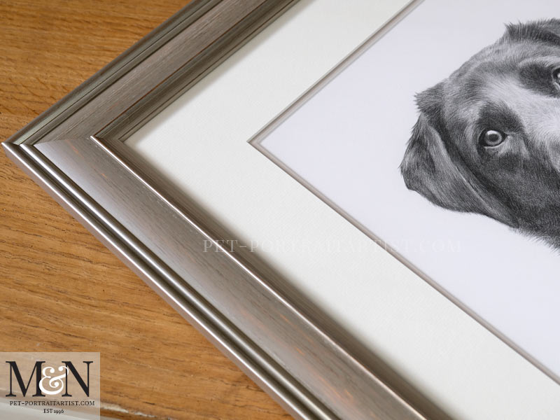 Black Labrador Portrait Framed