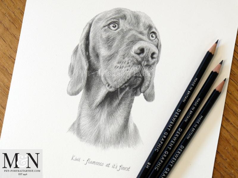Vizsla Pencil Pet Portrait