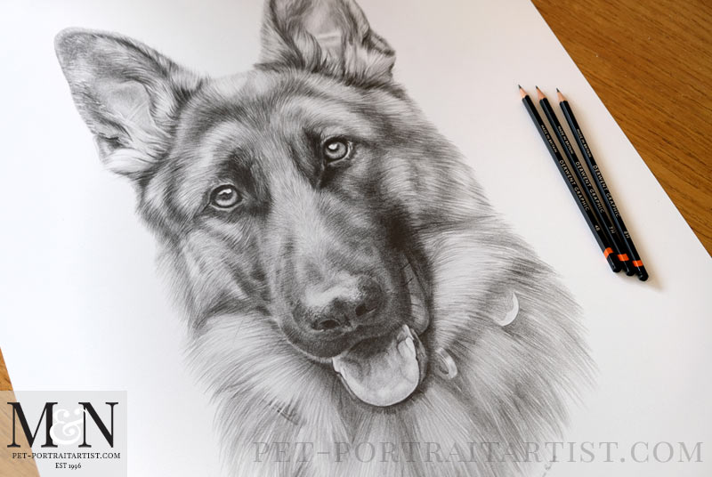 Alsatian Pencil Drawing