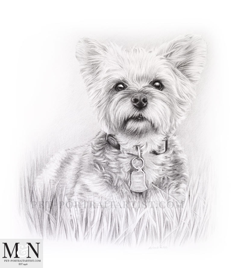 Pencil Pet Portrait Of Chloe