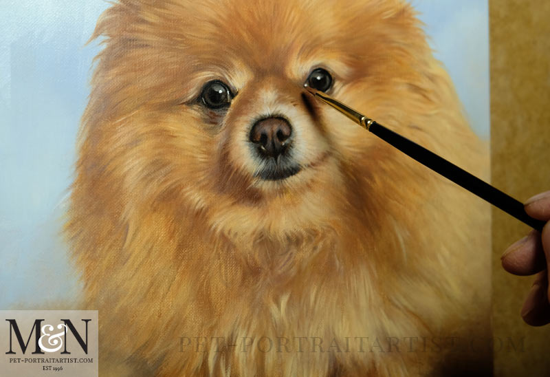 Oil Pet Portrait of Boo - In Progress