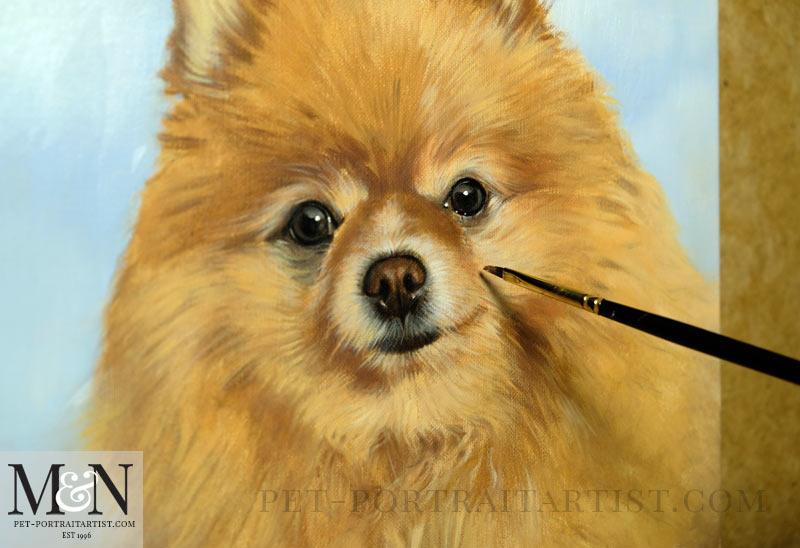 Oil Pet Portrait of Boo - In Progress