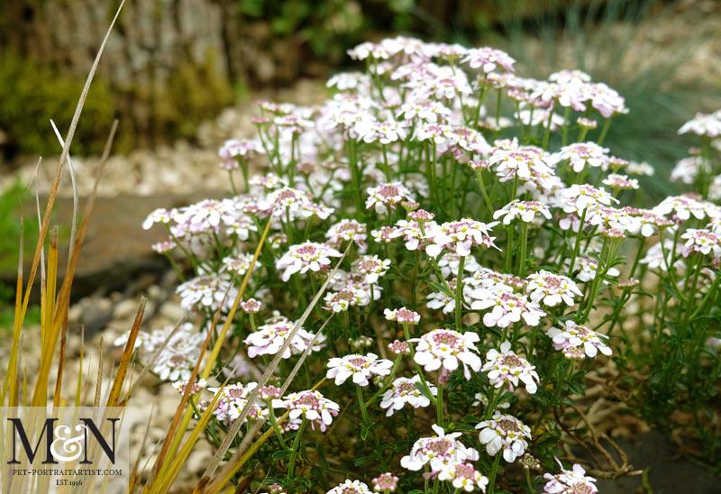 Garden flowering well...