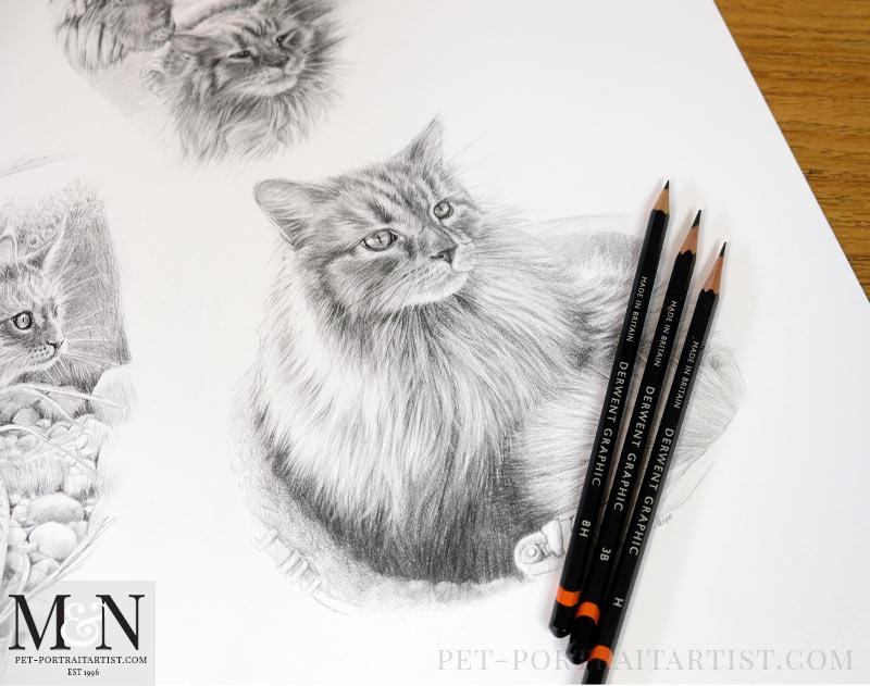 Cat Pencil Portrait