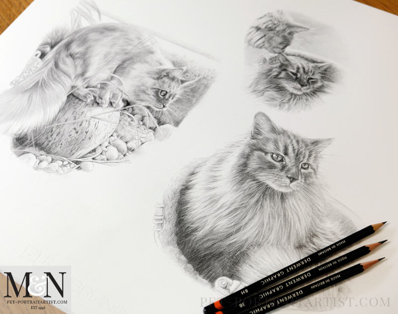 Cat Pencil Portrait