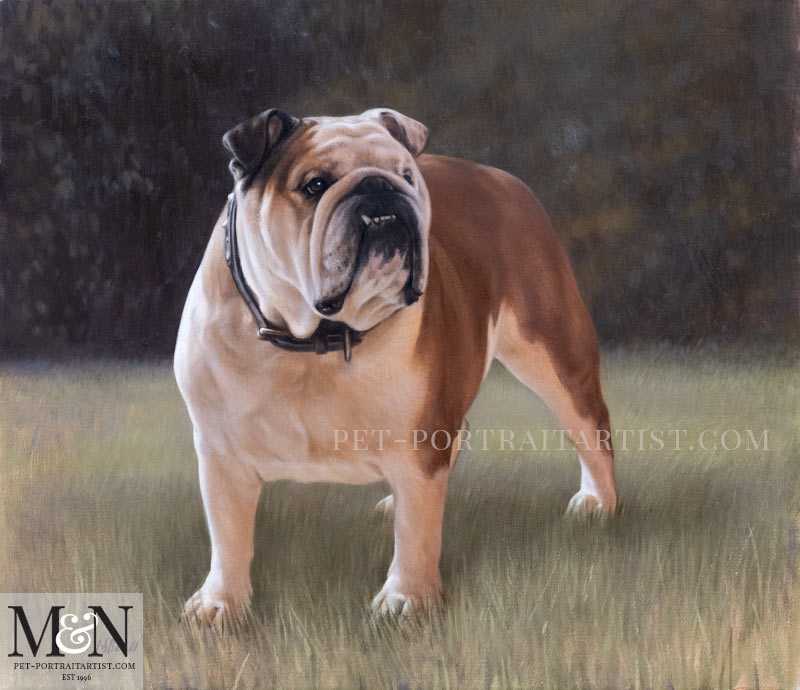 English Bull Dog Portrait