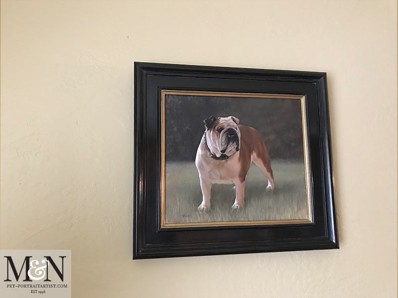 English Bull Dog Portrait Framed
