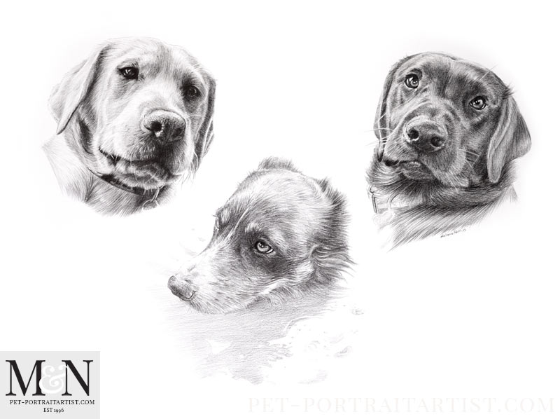 Triple Dog Pencil Portrait