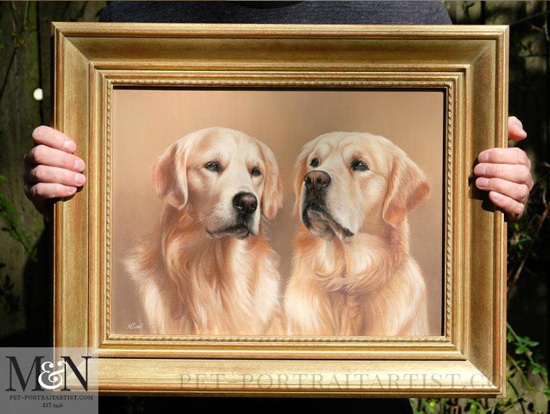 Golden Retriever Pet Portraits