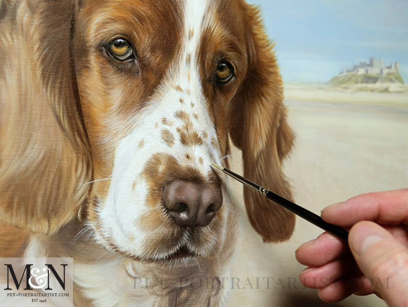 Spaniel Portrait in Progress