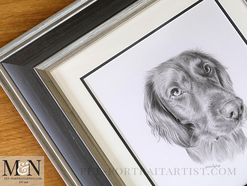 The Drawing of Bramble Framed