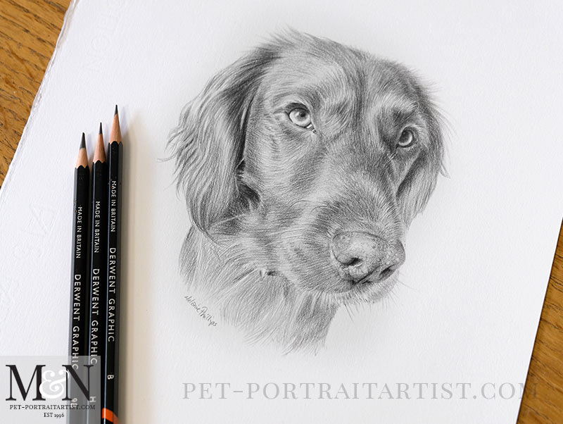 Drawing of Bramble along with my pencils