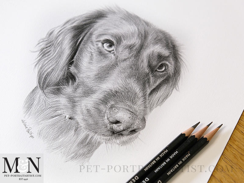 Drawing of Bramble with my pencils