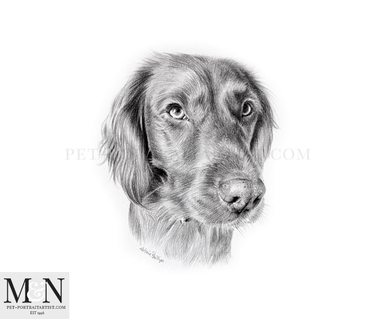 Pencil Drawing of Bramble