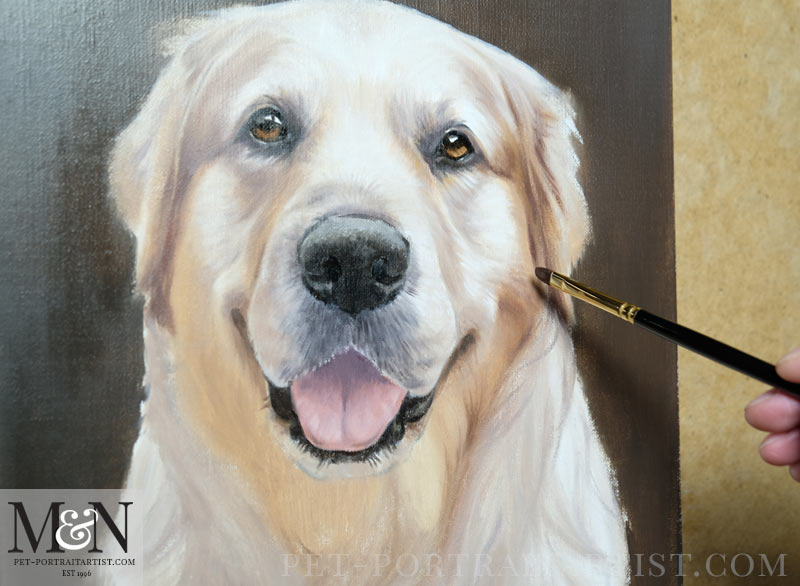 Golden Retriever in Progress