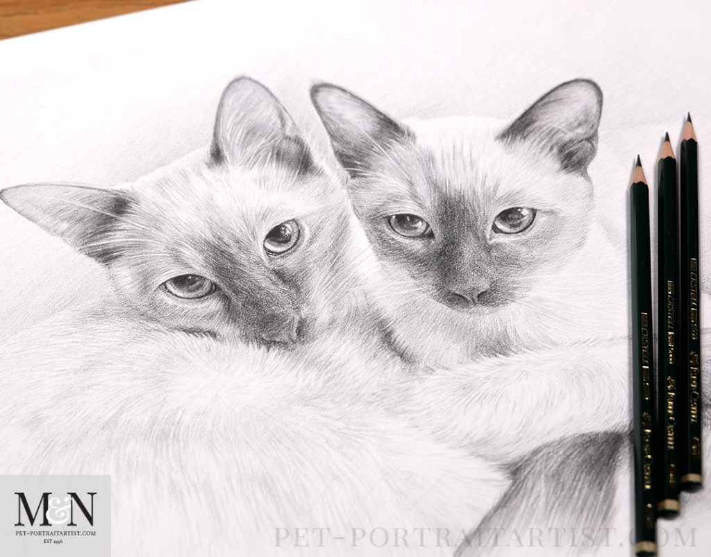 Cats in Pencil