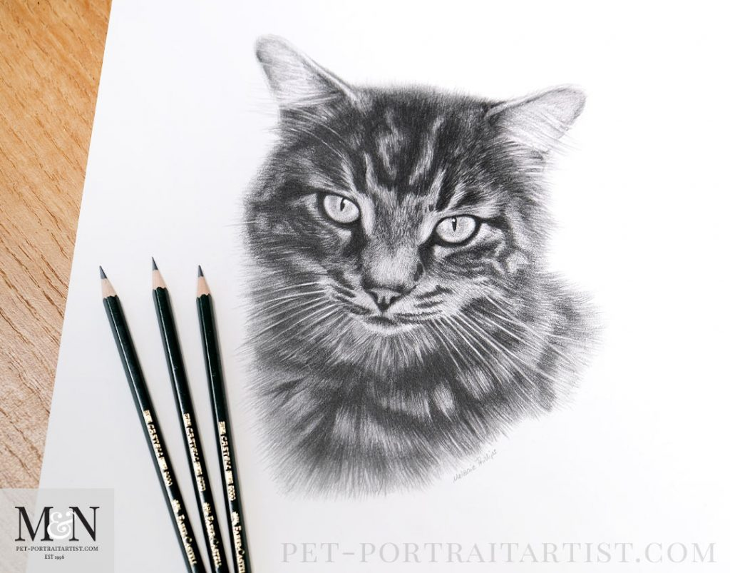 Pencil Portrait of Jet
