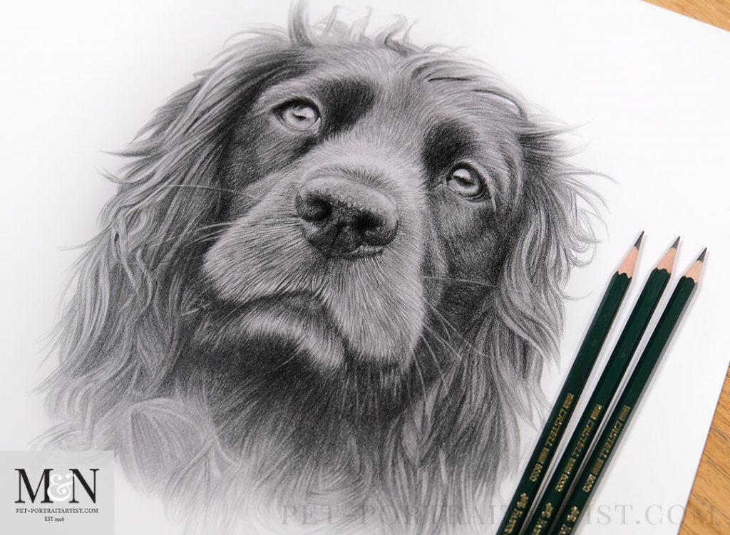 'Crumble' - Pet Portrait in Pencil