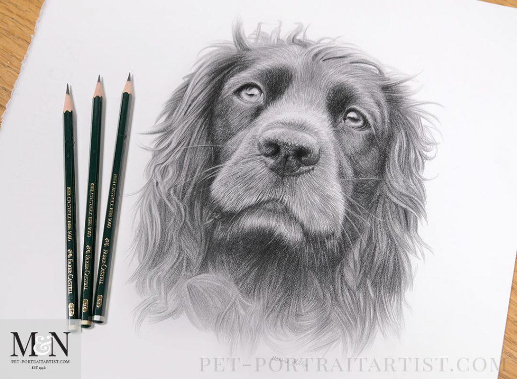 Melanie's December Monthly News - Pet Portrait in Pencil