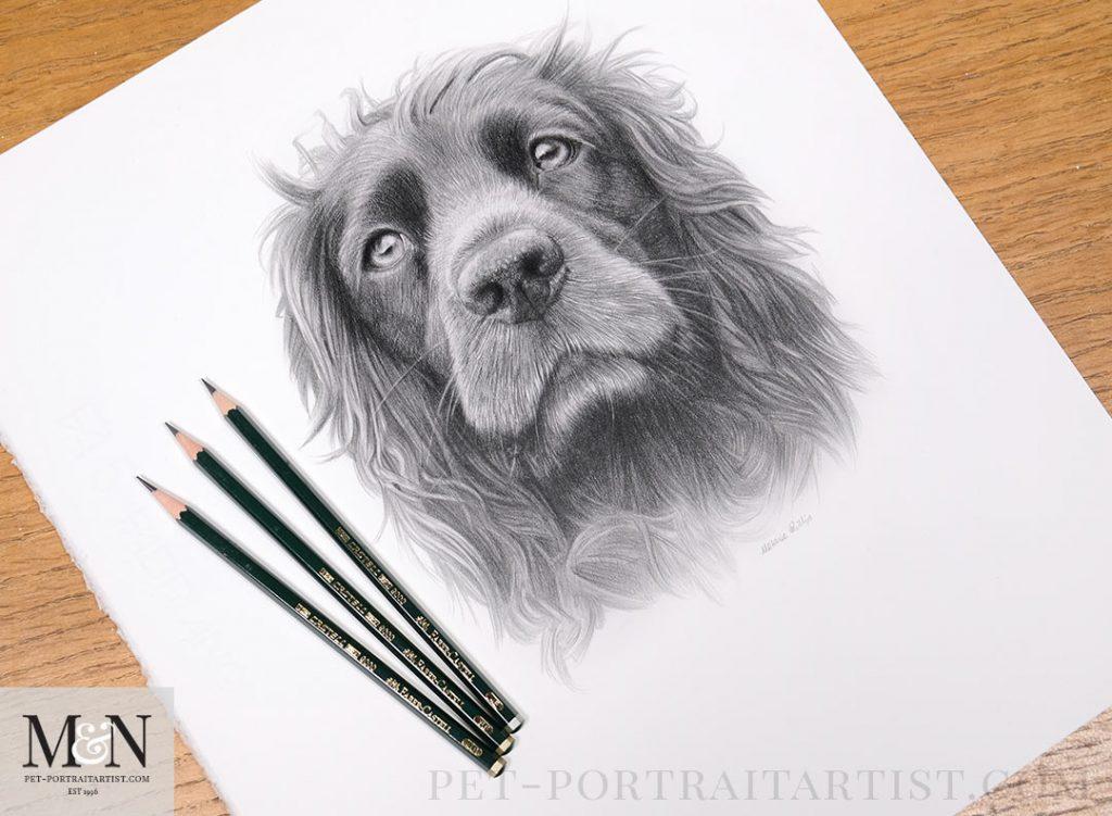 Pet Portrait by Melanie Phillips