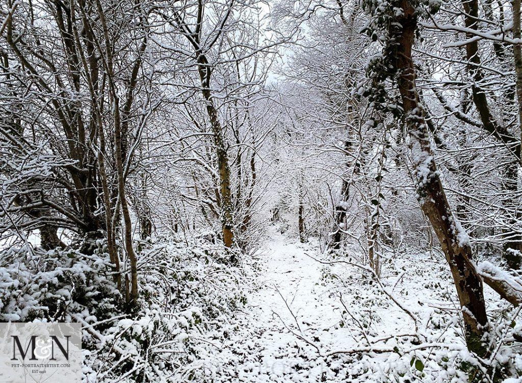 Melanie's December Monthly News - Walk along the Lane