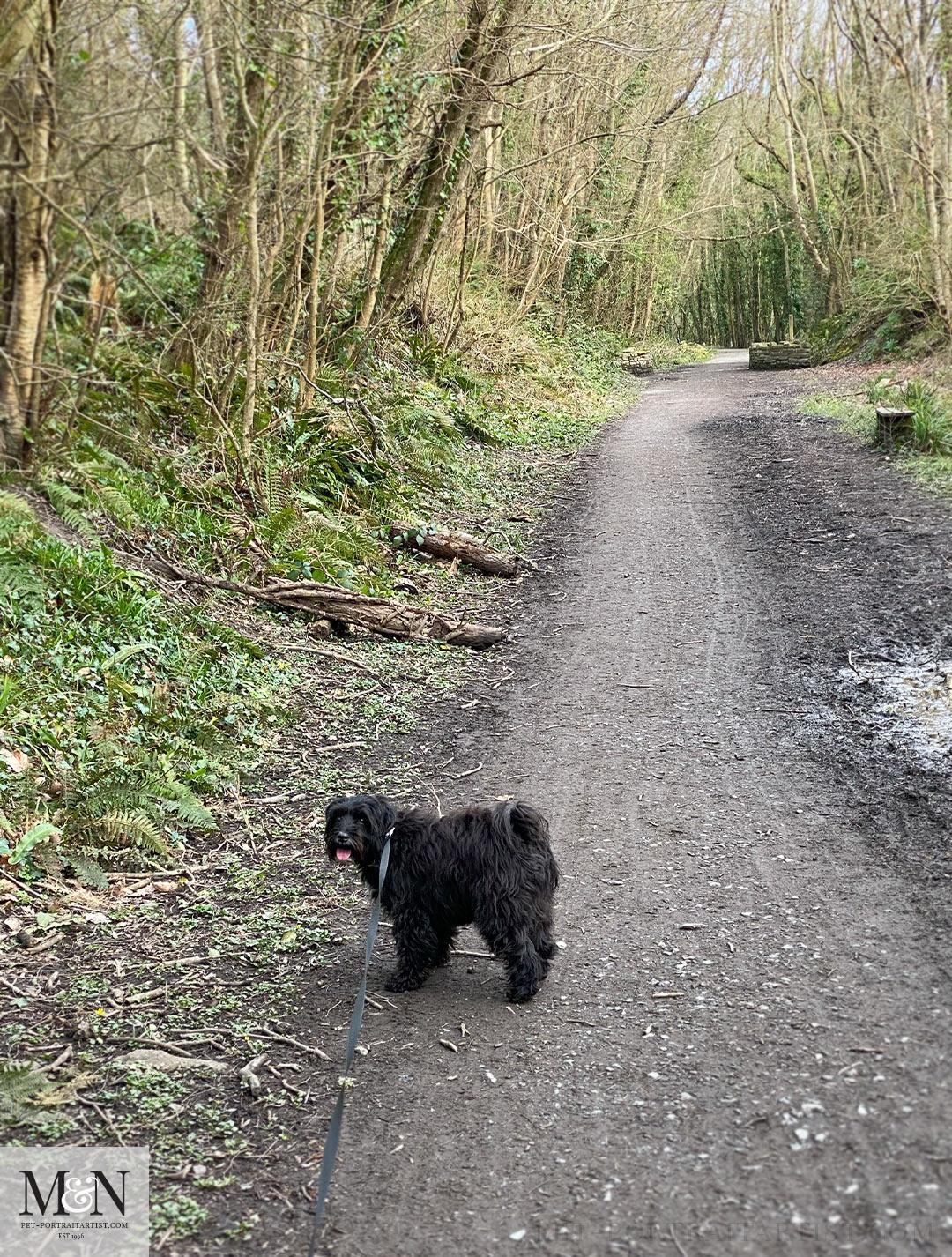 A walk with lily at Llanerchaeron