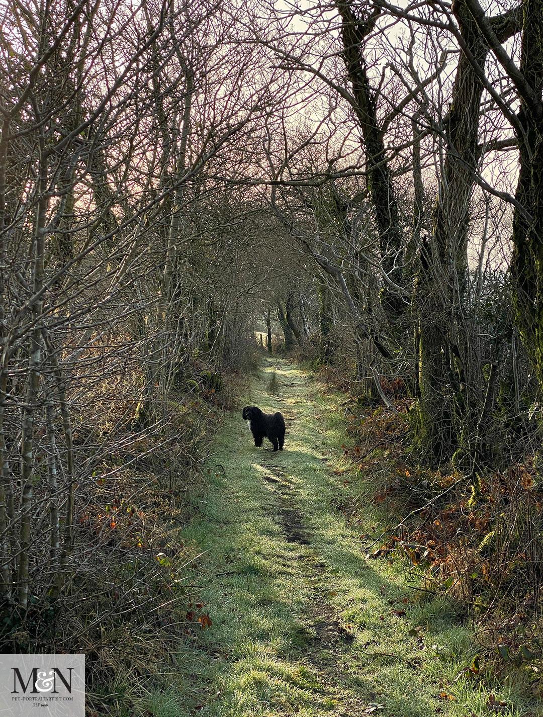 Lilys track