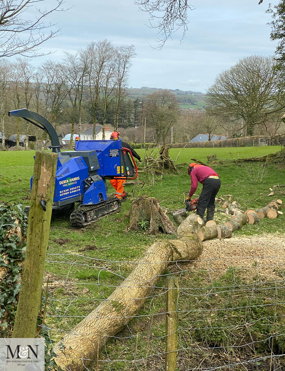 felling and chipping